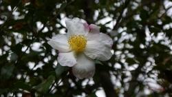 20141109冬の花へ3