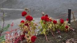 20141109冬の花へ1