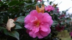 20141109冬の花へ2
