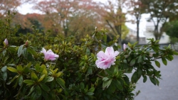 20141109冬の花へ4