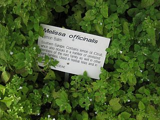 320px-Gardenology-org-IMG_2889_rbgs11jan.jpg