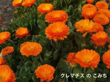 DSC01735_convert_20130311225020.jpg