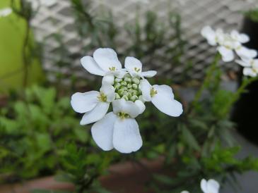 名も知らぬ花