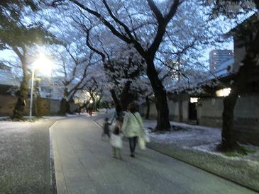 法明寺の桜並木