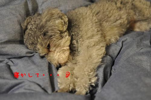 DSC_0035 寝かして