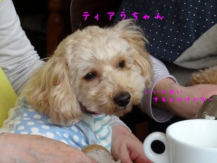 DSC00077 てぃあらちゃん