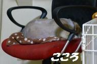 c320.jpg