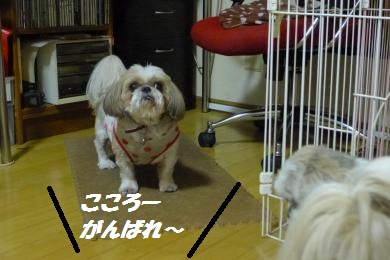 c322.jpg