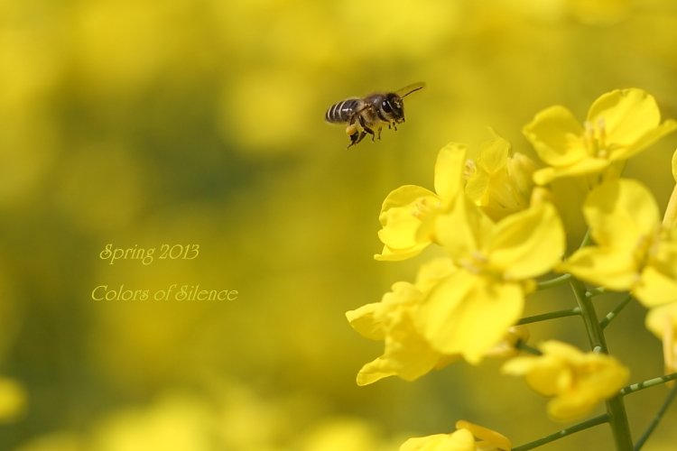 1-spring.jpg