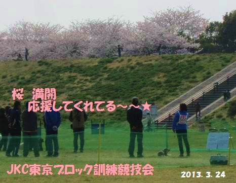 桜満開の競技会