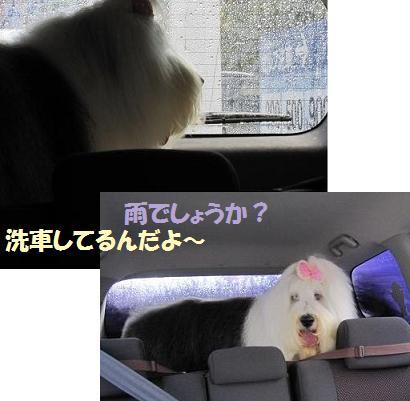 洗車中dayo