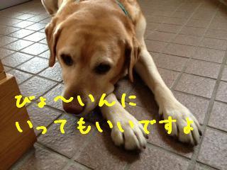 1_20130423140227.jpg