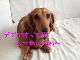 1_20130513105807.jpg