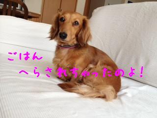 1_20130527142510.jpg