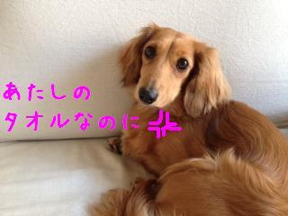 5_20130522104938.jpg