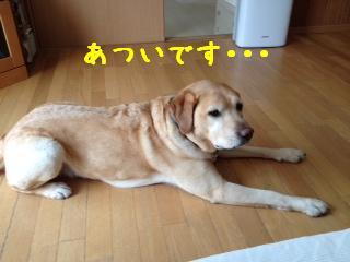___20130527142511.jpg