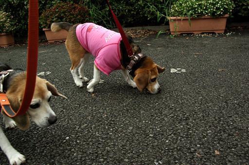 110820A-05cookychara go dog run