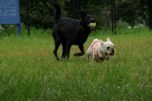 110820A-08black dogflench