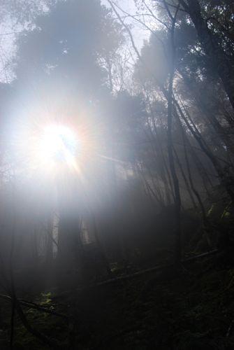 1朝霧の森