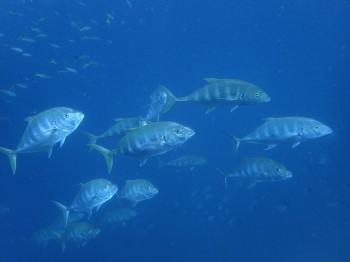 タオ島、海ブログ、11月6日