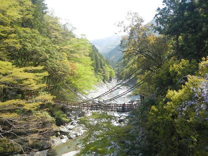 20130501_祖谷の蔓橋