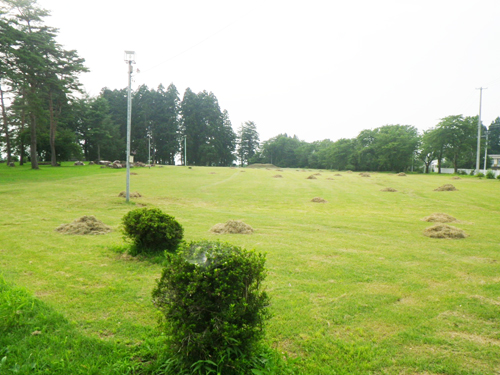 刈り取った草を集めて山盛りに。