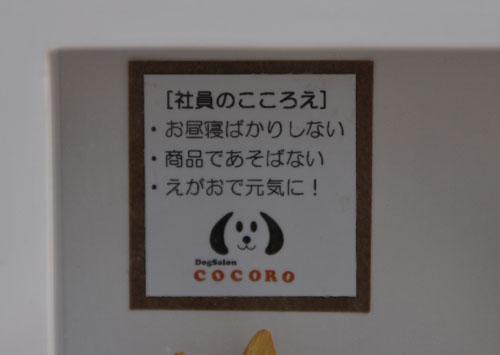 cocoroe_0514.jpg