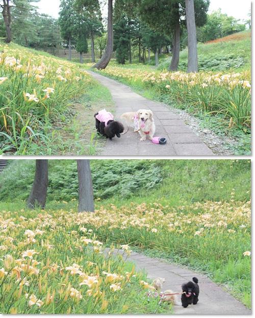 cats_20120720192338.jpg