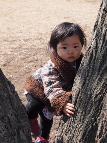 木のぼり (1)