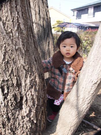 木のぼり (2)