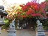2014/11/27天園〜獅子舞8