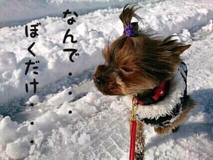 そら初めての雪5