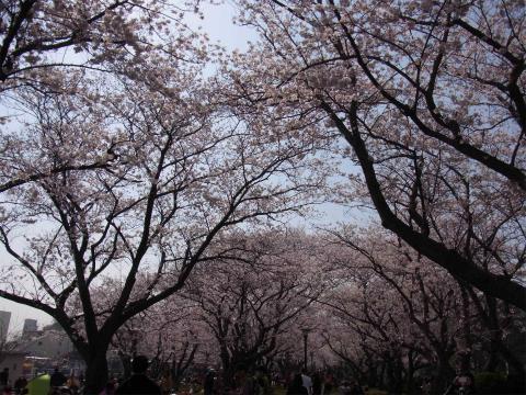 yokosuka_01.jpg