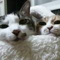 猫ベッドからコンニチワ