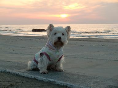 湯野浜の夕日ときなこ