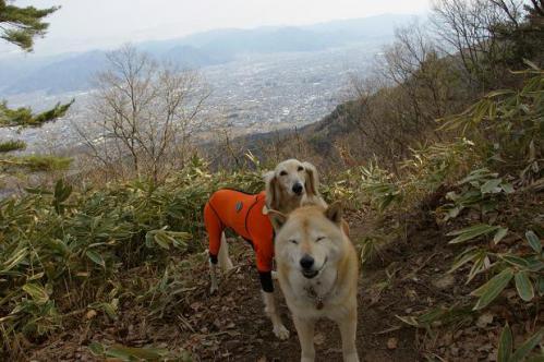 春山とシャンソン8