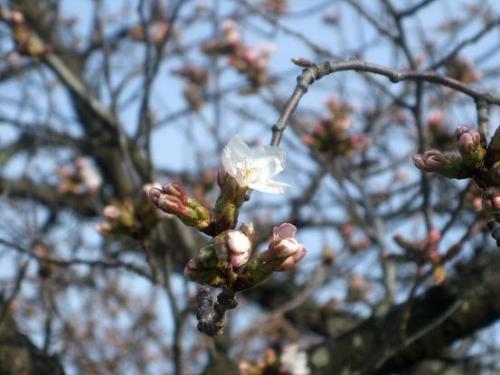 陽春の候5
