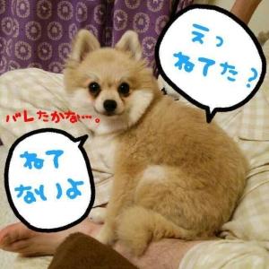 1384436011889_resize_20131114_223421.jpg