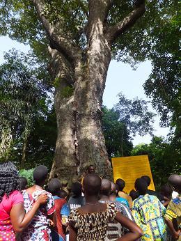 大きな木ヒロコ