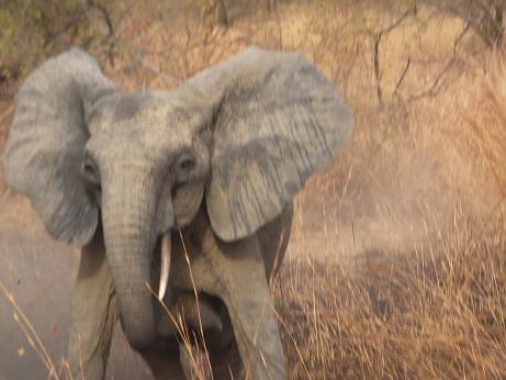 象がやってきた!?