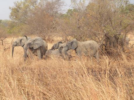 象の家族でした