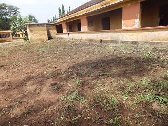草刈アフター