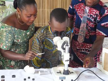顕微鏡をのぞきこむ
