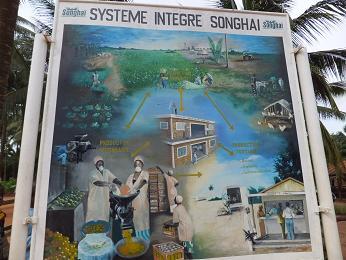 ソンガイの循環農業のイメージ図
