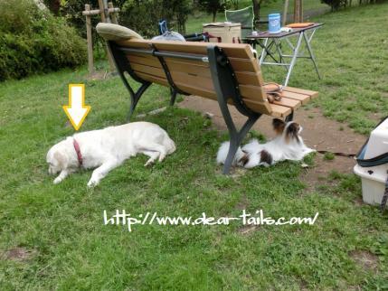CIMG0914_20120505094948.jpg
