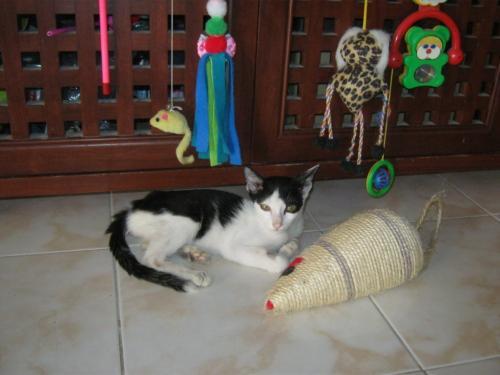 cats5+104_convert_20120706162012.jpg