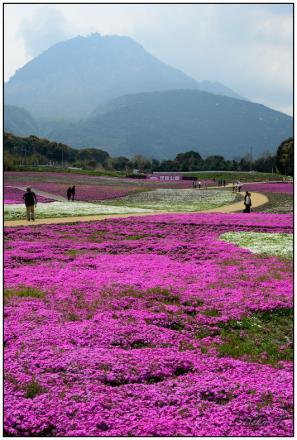 2012年4月15日しまばら芝桜公園、霊丘神社 (18)