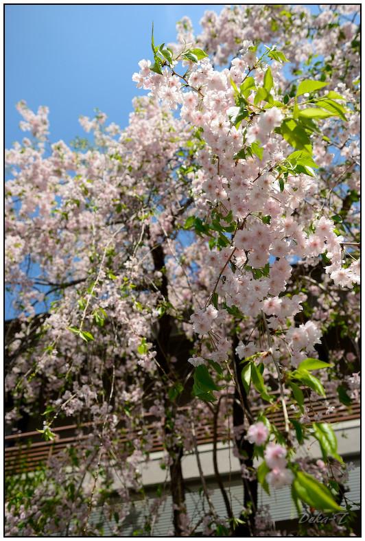 2012年4月20日~22日神戸 (47)