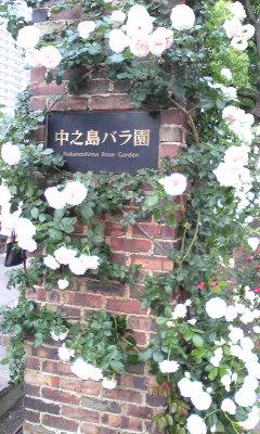 nakanosima_rose0525_2013_6.jpg