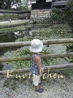 蓮池と芽キャベツ